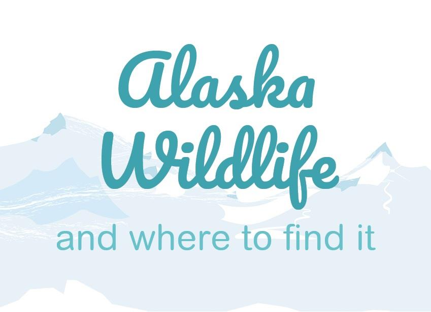 Alaska Wildlife and Where to Find It