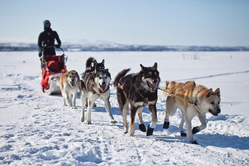 Top Family Activities in Alaska