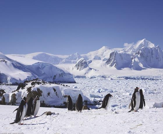 South America & Antarctica Adventure